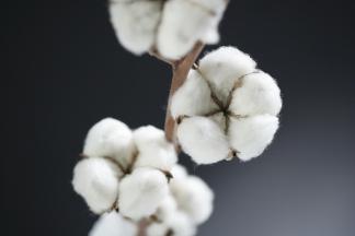 cotton records